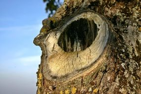 A hole in the tree