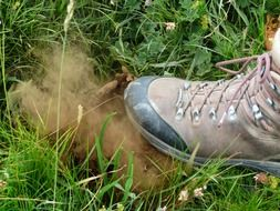 bovist mushroom dust crush spores shoes
