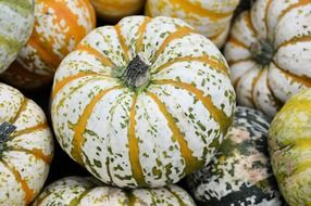 pumpkin as a decorative vegetable