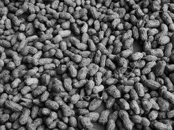 Black and white photo of peanuts