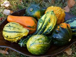 variety of pumpkins in a bowl on the grass
