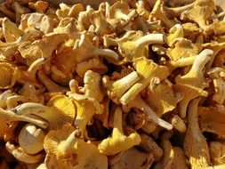 mushrooms chanterelles market sale