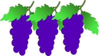 grapes clusters drawing