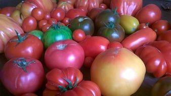 Tomatoes of different types