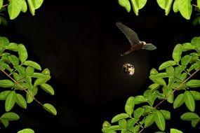 moon night birds