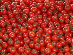 red tomatoes with tails