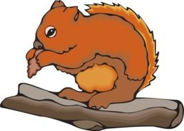 drawing of a squirrel with a nut on a tree branch