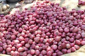 red onion market