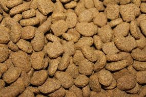 Brown small dog food