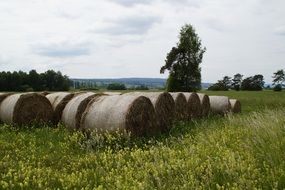 hay bales on field with yellow flowers