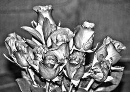 bouquet of roses in black and white image