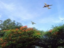 plane flies over green trees