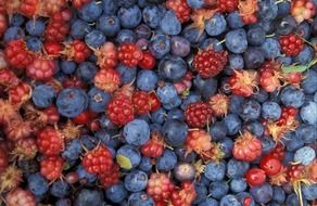 The fruits of the forest are blueberries and blackberries