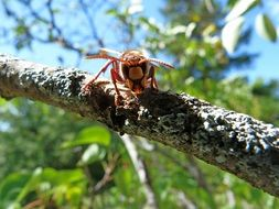 hornet on a tree on a sunny day close up