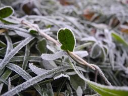 frozen leaves and grass