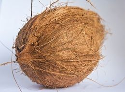 coconut dried