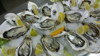 oysters with lemon on ice, haute cuisine