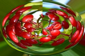 cherries in a distorted image