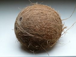 Coconut is an exotic fruit