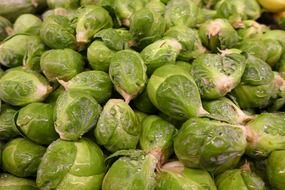 harvest of green brussels sprouts