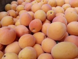 apricot fruit health healthy juicy