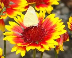 bright butterfly among colorful flowers close-up