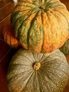 pumpkin the autumn vegetable