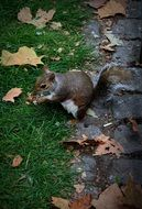 squirrel in a london park