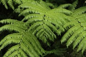 green fern jungle forest