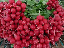 radishes for healthy eating