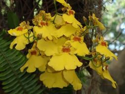 blooming yellow orchids in a botanical garden