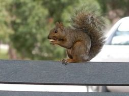 squirrel on park bench