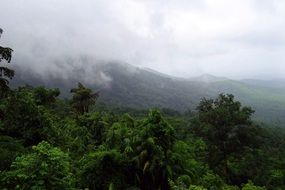 rainforest in the mollem national park