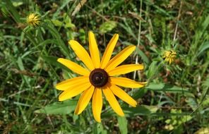 yellow daisy on stalk