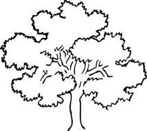 wide tree, black outline