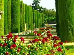 beautiful trees and flowering beds in a park in Cordoba