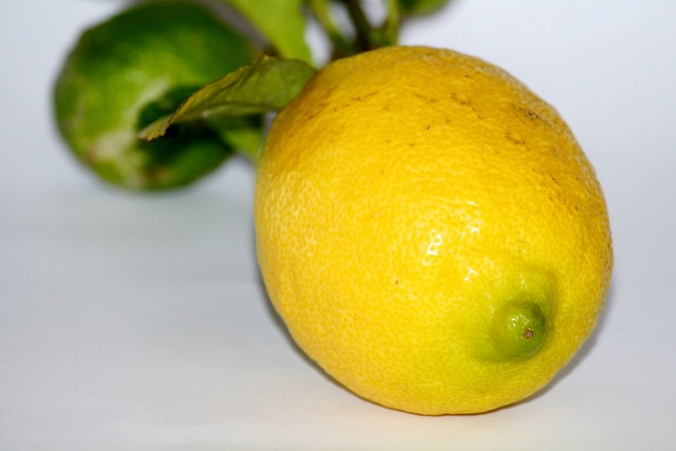 ripe lemon with green leaves