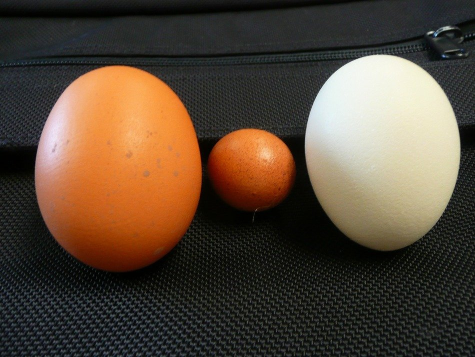 chicken eggs of different sizes