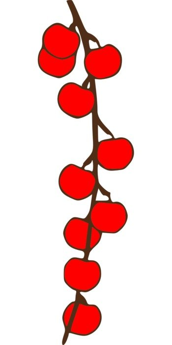 small red fruits on twig, drawing