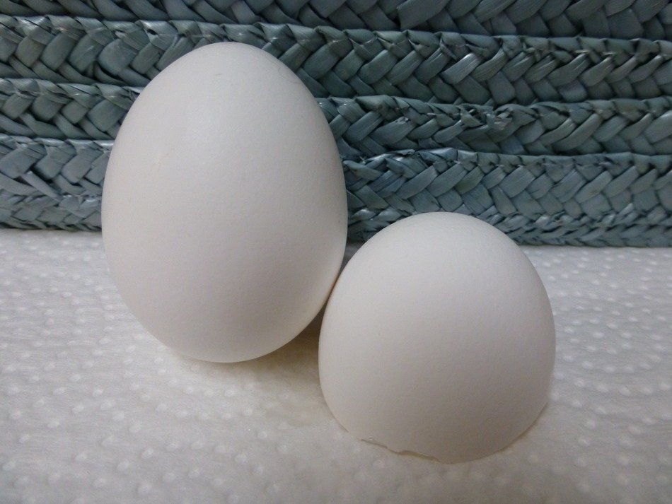 white eggs chicken food