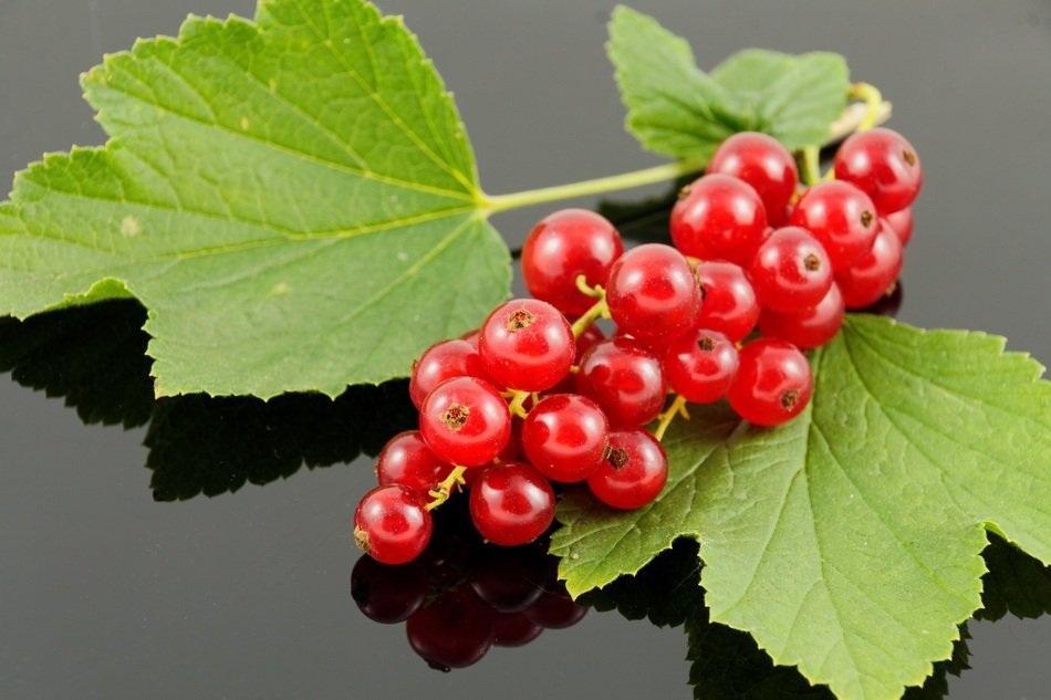 red currants on a reflection surface