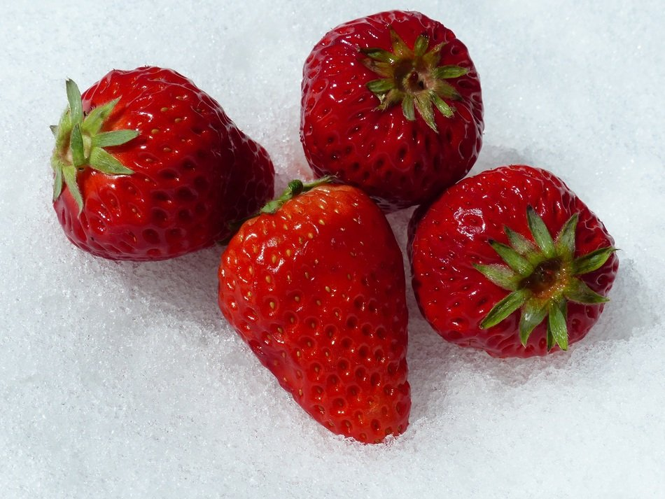 four red strawberries on snow