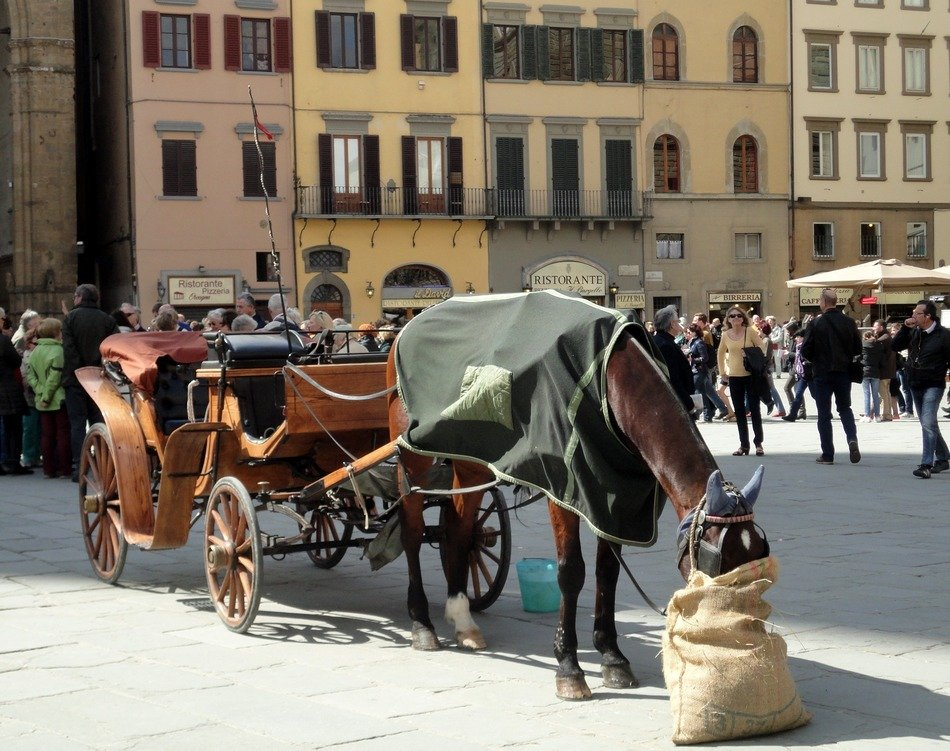 elegant horse with carriage walks through the streets of Italy