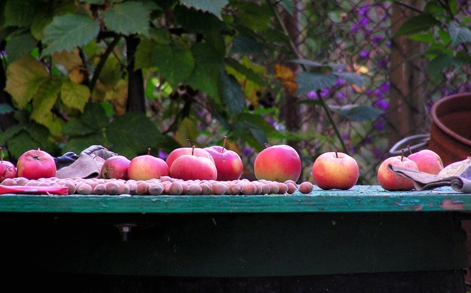 apples on a wooden table in the garden