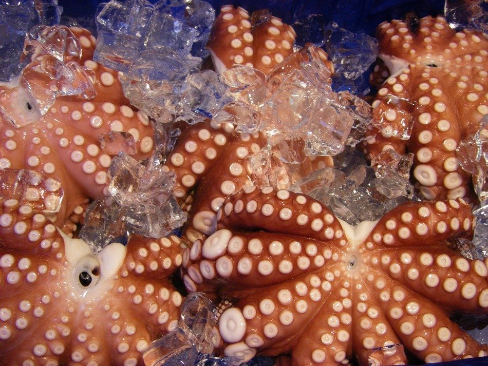 raw octopuses, frozen seafood