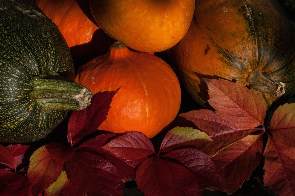 picture of multi-colored pumpkins and autumn foliage
