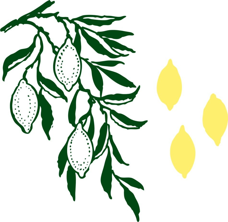 Lemons from the lemon tree clipart