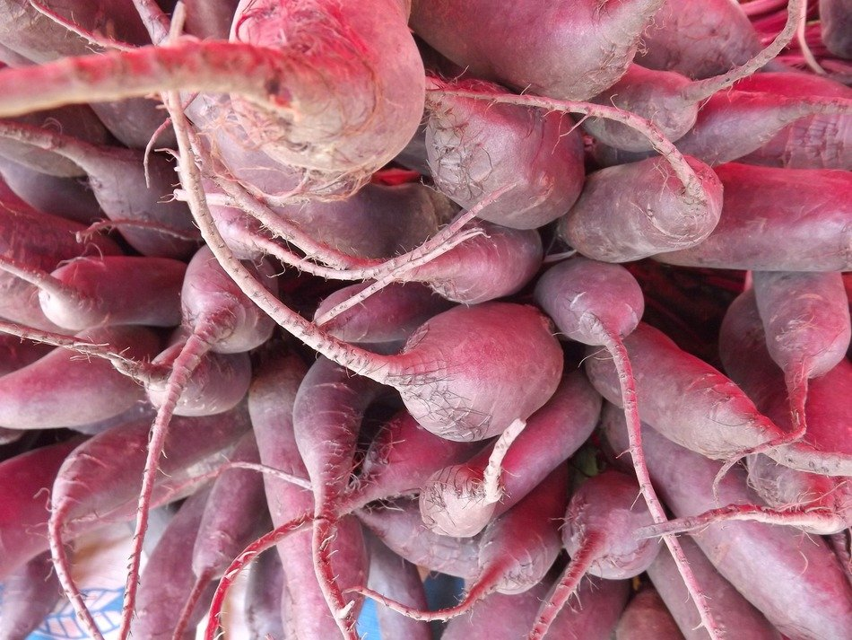 Healthy radishes in a pile