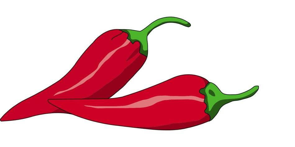 chilli red pepper drawing