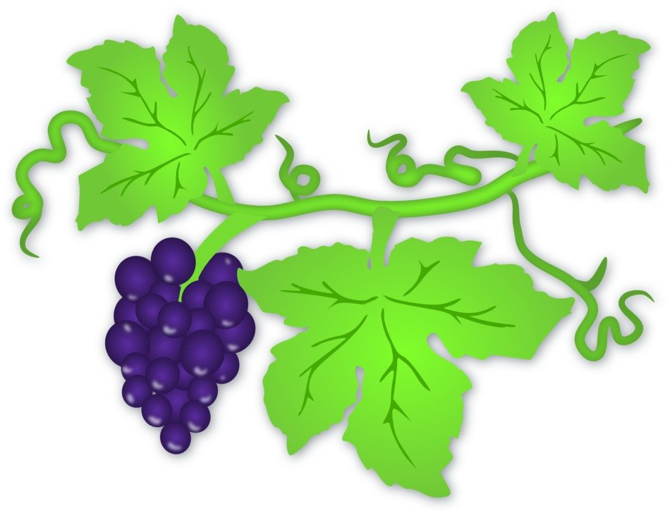 Violet grapes on the branch clipart